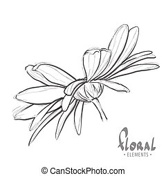 Design sketch of daisies - Beautiful sketch of daisies on a...