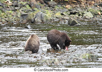 Bears in Alaska - Bear viewing in Pavlov lake and pack...