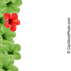 Beautiful floral background, frame wiht place for your text