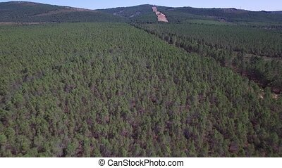 Flying over large pine tree forest - Aerial view flying over...