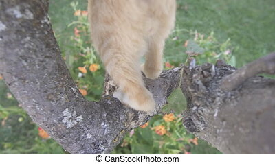 Red haired cat descends tree using trunk - Top view of red...