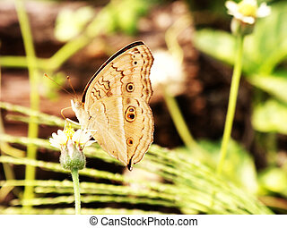 ventral view of agraulis vanillae butterfly against light...
