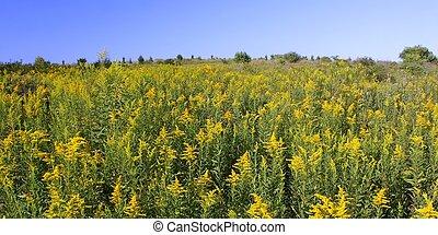 Rock Cut State Park - Illinois - Beautiful yellow flowers...