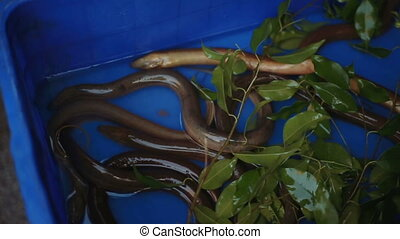 Eels in the market, material of famous vietnam dish nha...