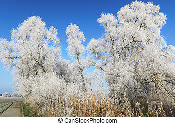 trees with rime frost crystals in winter time