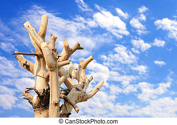 Tree branches trimmed with blue sky