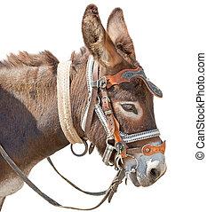 cute donkey - Donkey isolated on the white background