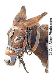 cute donkey - Donkey isolated on the white background