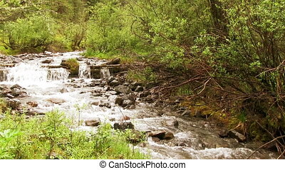 Mountain River - Mountain river in the summer forest