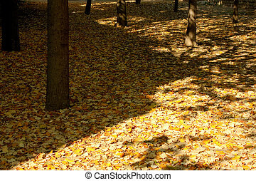 autumn fall - Fall in a park in Barcelona