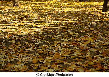autumn. fall - Fall in a park in Barcelona
