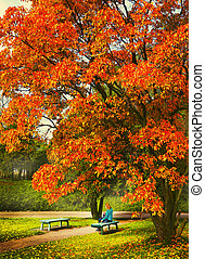 fall sceen with poplar tree bench and girl - european fall...
