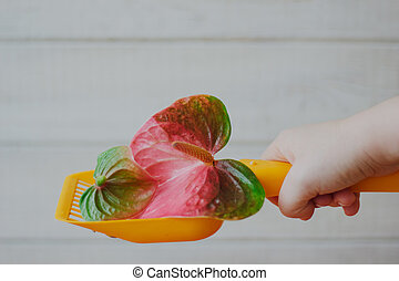 Yellow plastic scoop for cat litter cleaning whith the anthurium flower - nice scent and no smell concept.