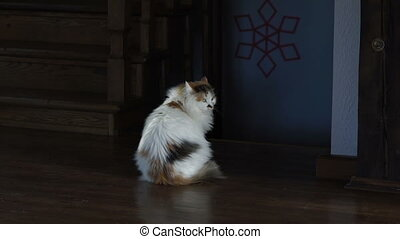 Big cat sitting on the wooden floor and looking back