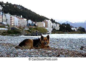 Dog at lake beach - Dog at Nahuel Huapi lake at sunset in...