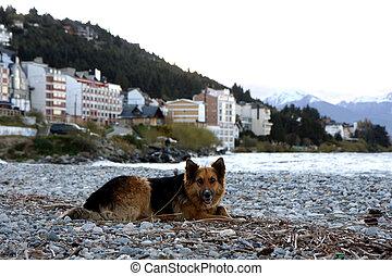 Dog at lake beach - Dog at Nahuel Huapi lake at sunset in...
