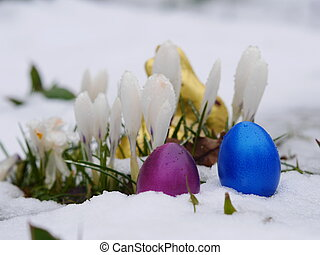 easter eggs laying snow flowers - easter eggs laying in snow...