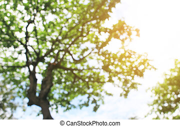 Copy space of nature green bokeh sun light flare and blur leaf branch abstract texture background