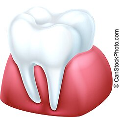 Gum and Tooth - A dental medical illustration of a tooth and...