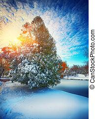 Sunlight breaks through the pine tree in winter