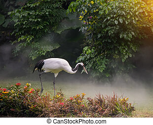 Red-Crowned crane in zoo
