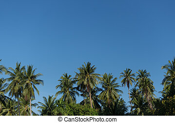 tops of the palm trees on blue sky background