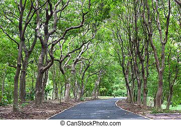 wayside trees - Beautiful wayside footpath trees in the park