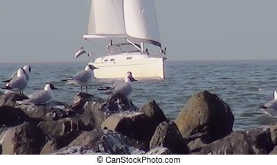 "Seabird looking to the sailboat. - Harbour of the island ""De..."