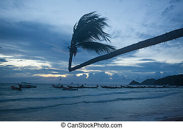 coconut palm tree at tropical beach on sunset
