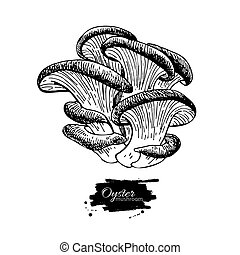 Oyster mushroom hand drawn vector illustration. Sketch food...