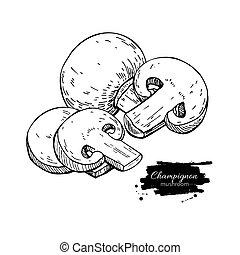 Champignon mushroom hand drawn vector illustration. Sketch food