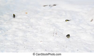 titmice eating sunflower seeds on snow