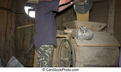 Man pour dry harvested oat grain into retro sifting machine with bucket