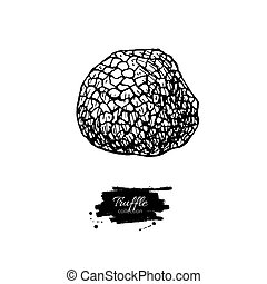 Truffle mushroom hand drawn vector illustration. Sketch food...