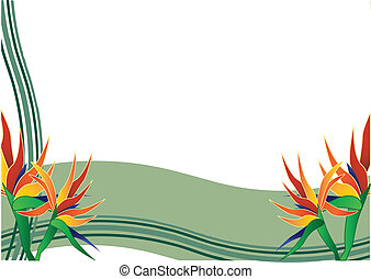 bird of paradise flower - bird of paradise white background...