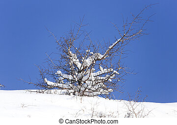 tree in the snow against the blue sky