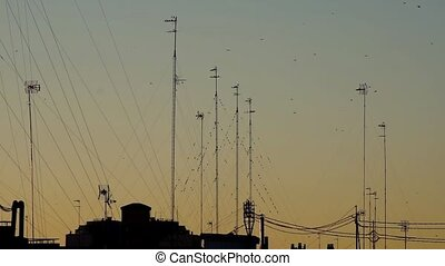 flying swallows silhouettes of buildings and antennas in at...