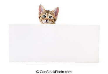 Kitten hanging over blank posterboard. - Kitten hanging over...