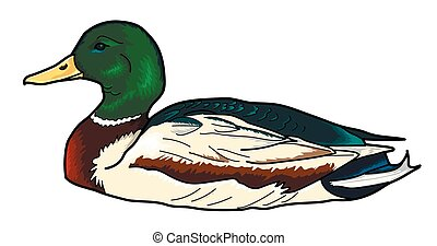 duck.eps - Duck on a white background. Head and Neck emerald...