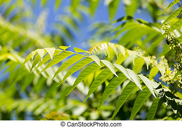 green leaves on the branches of a tree in nature