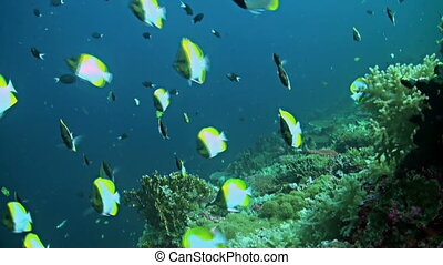 Coral reef in Philippines with plenty fish