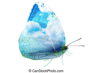 butterfly sky wing isolated - Double exposure of butterfly...