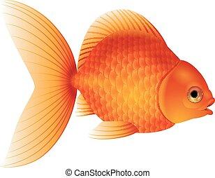 Cartoon goldfish isolated on white background - Vector...