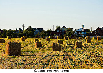 Field with bales of straw after harvest