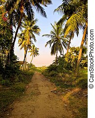 Dirt Road - A dirt road among the palm trees.