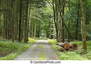 Waldfweg, Laubwald, Bäume, Syke, Niedersachsen, Deutschland