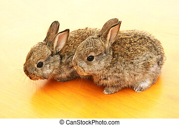Young rabbits - Two young rabbits on yellow table.