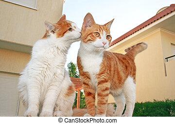 gatos, familia