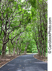 Beautiful wayside footpath trees in the park