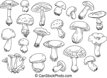 Freehand drawing mushrooms items. Isolated on white...